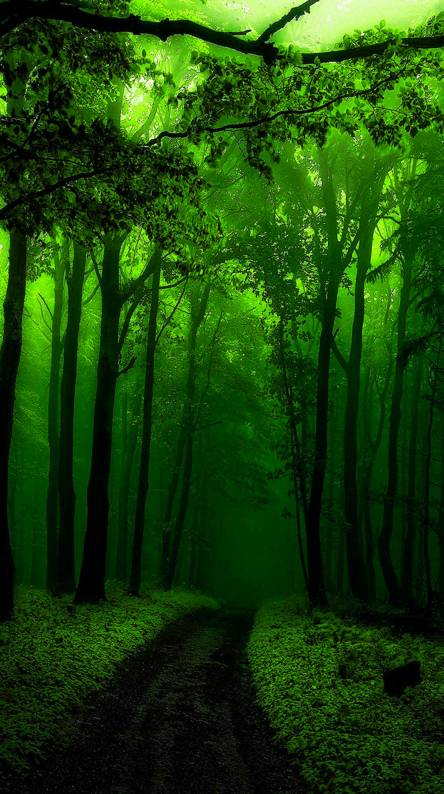 Green Forest Ringtones And Wallpapers Free By Zedge