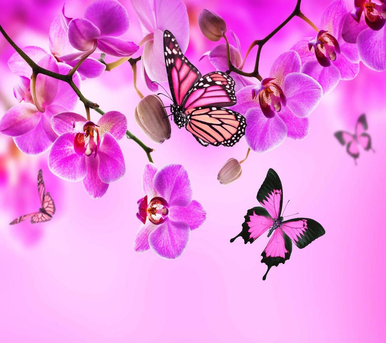 Orchids butterflies