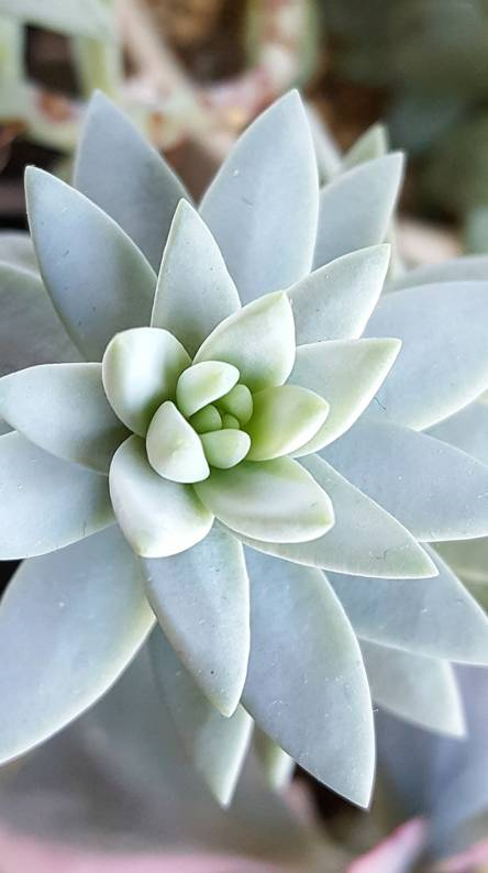 Succulent Wallpapers Free By Zedge