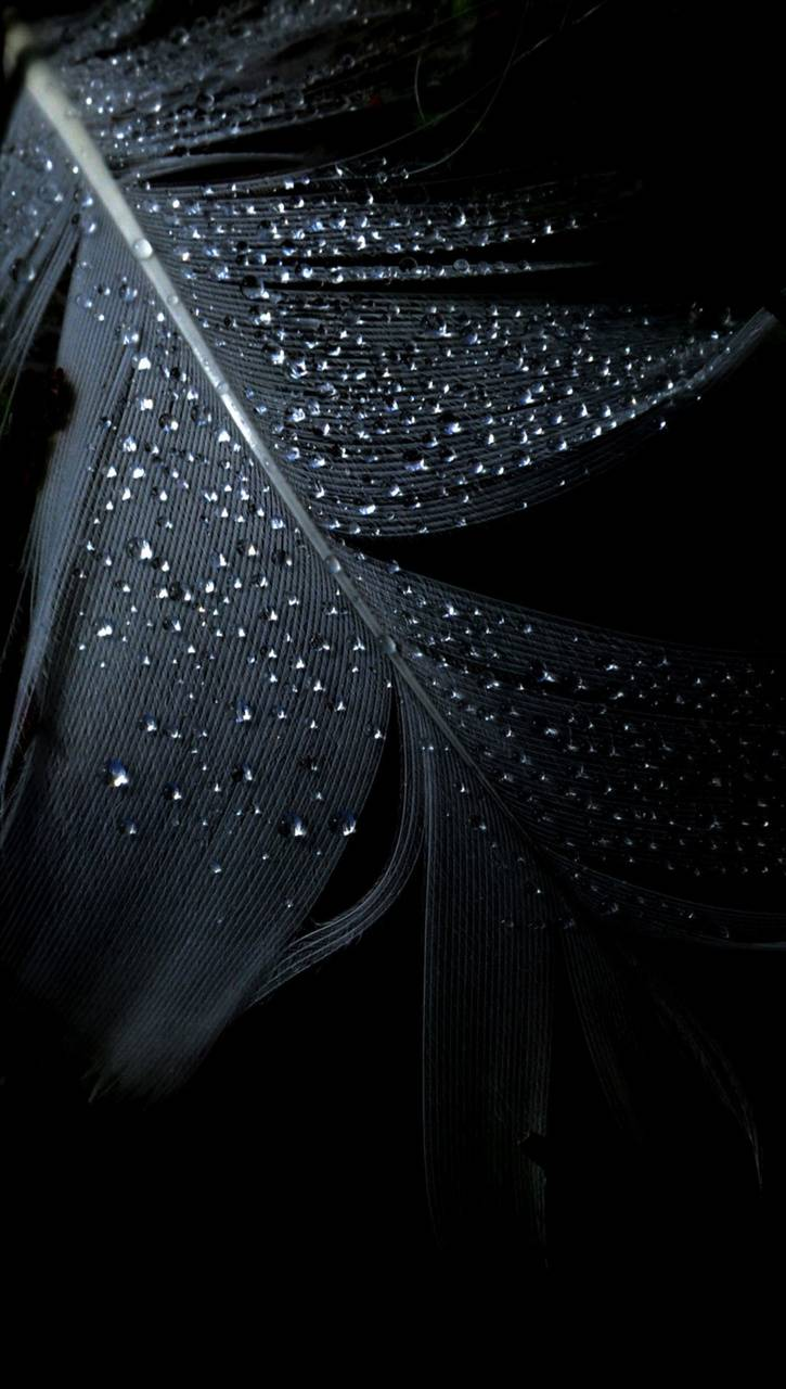 feather drops