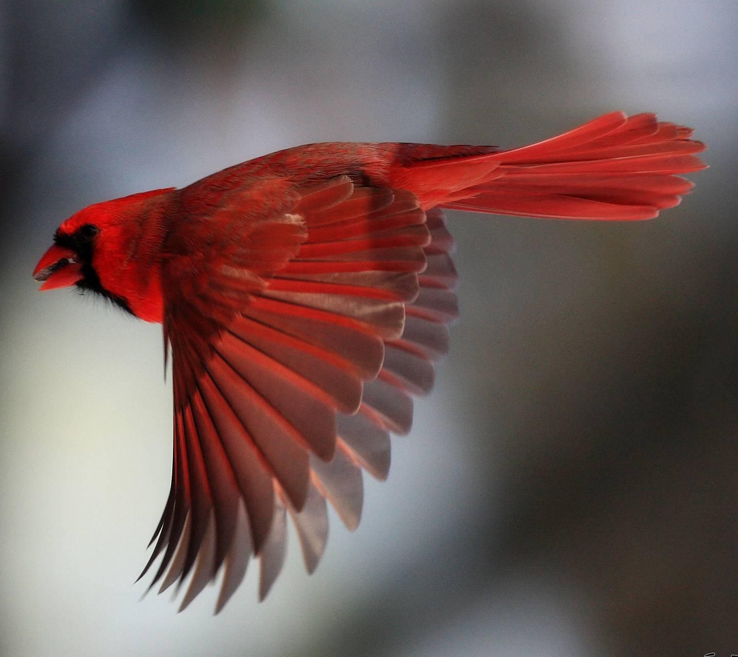 Cardinal7213