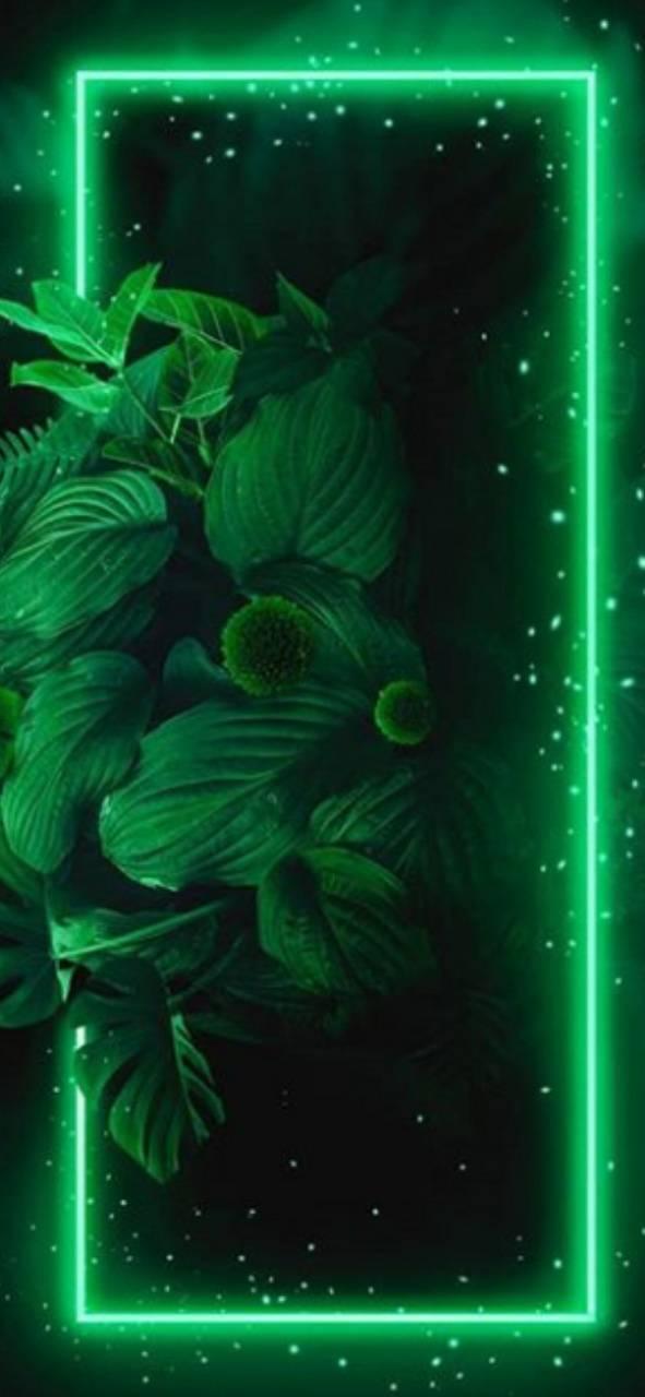 Green flowerbox