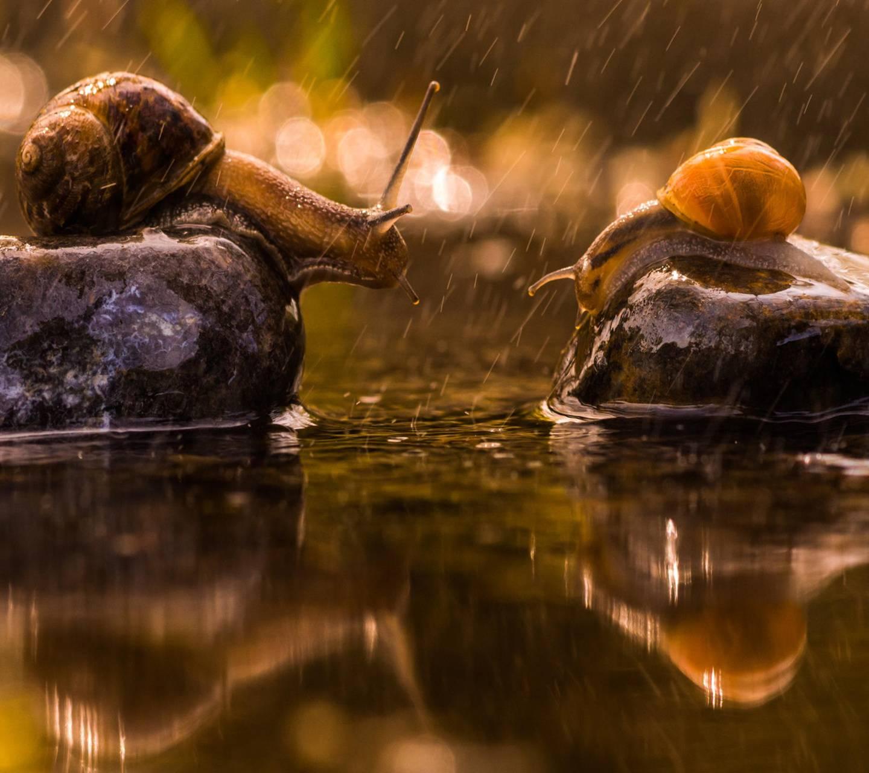 Rainy Snails