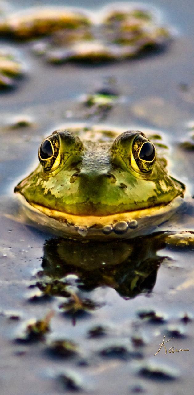 BSI Bullfrog