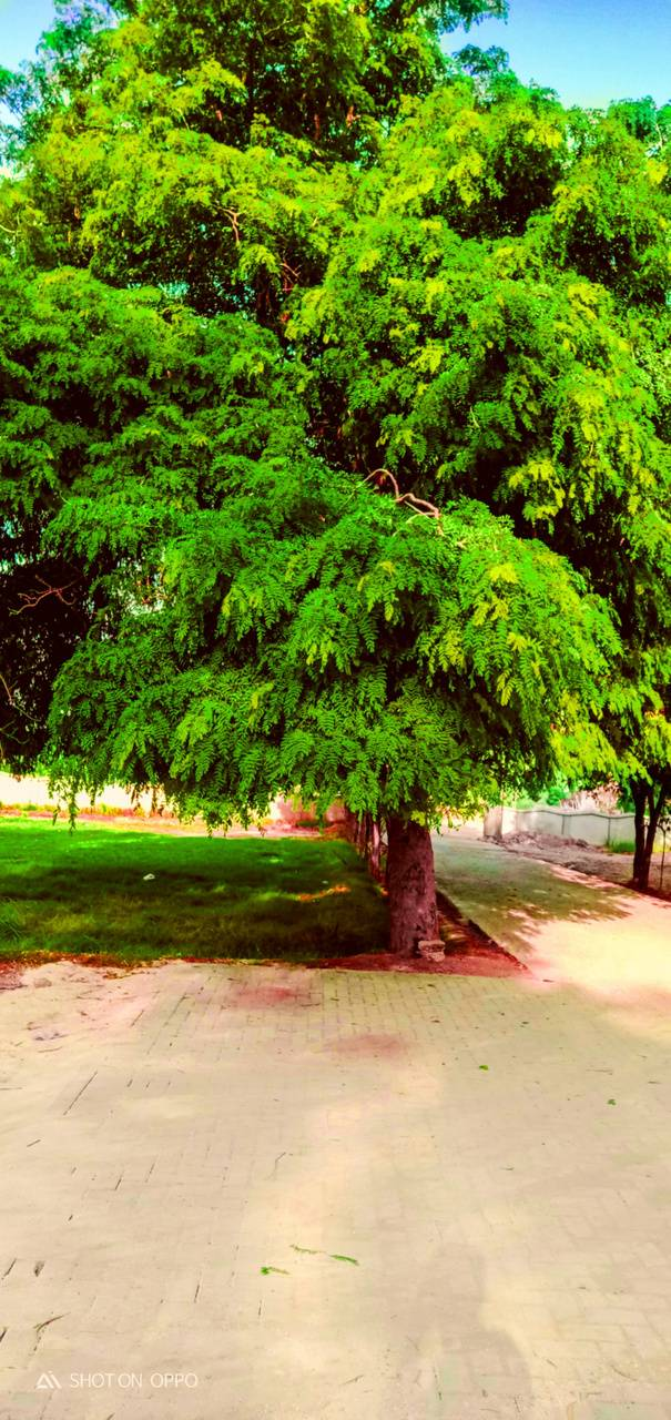 trees greenity