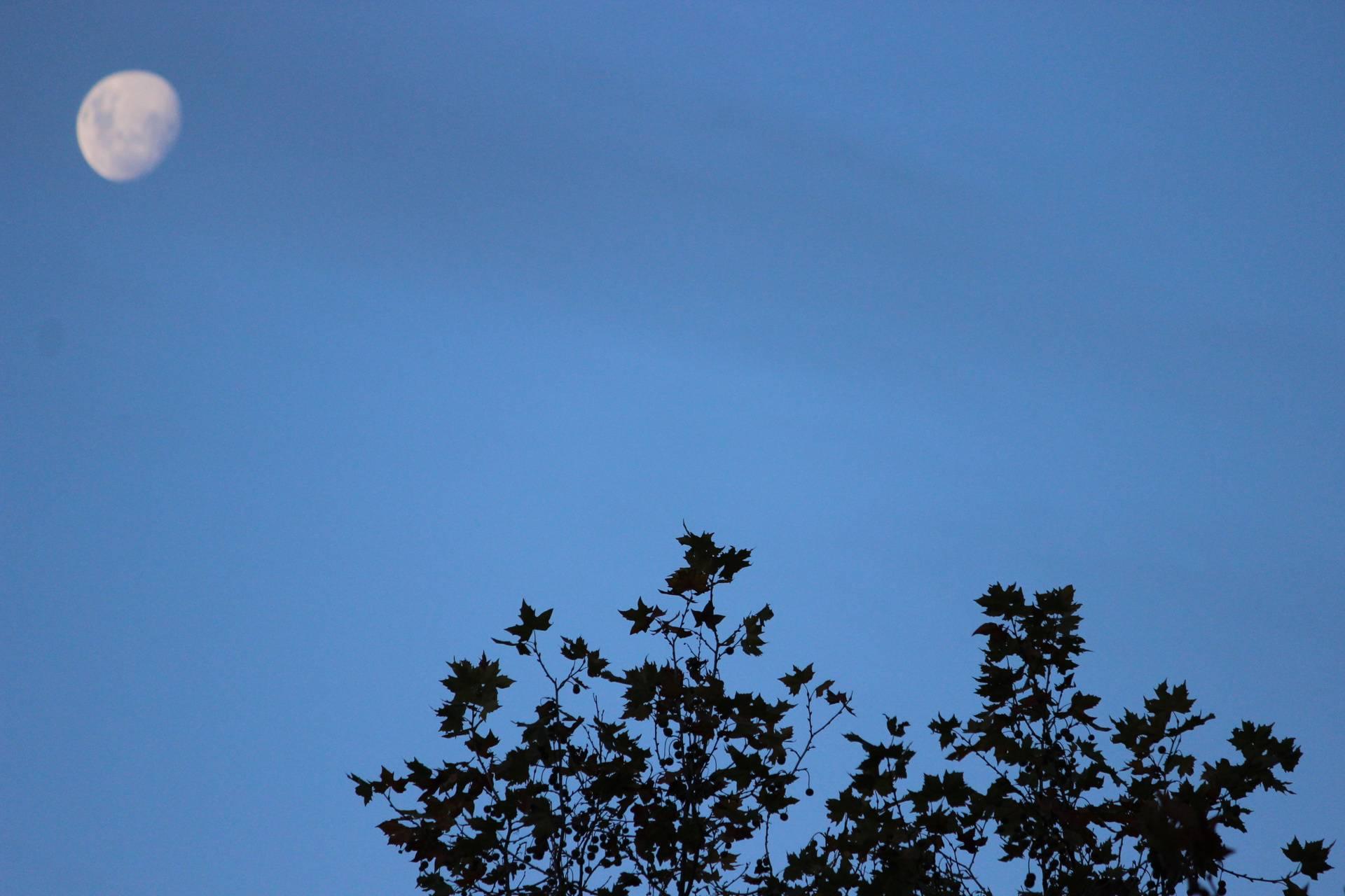NZ skies