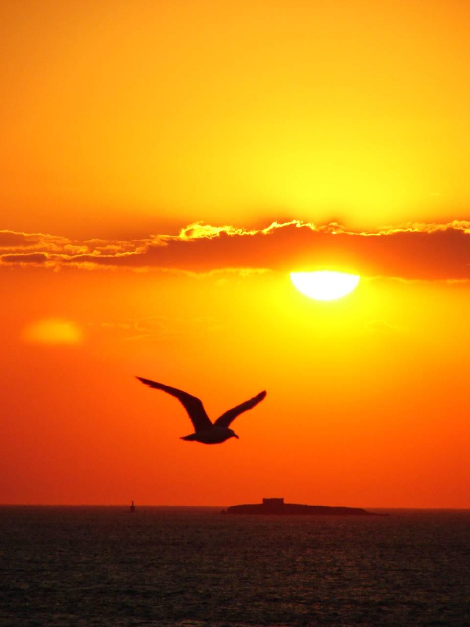 Bird Sunset
