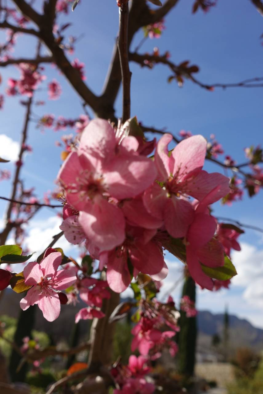 El Paso Rose Garden