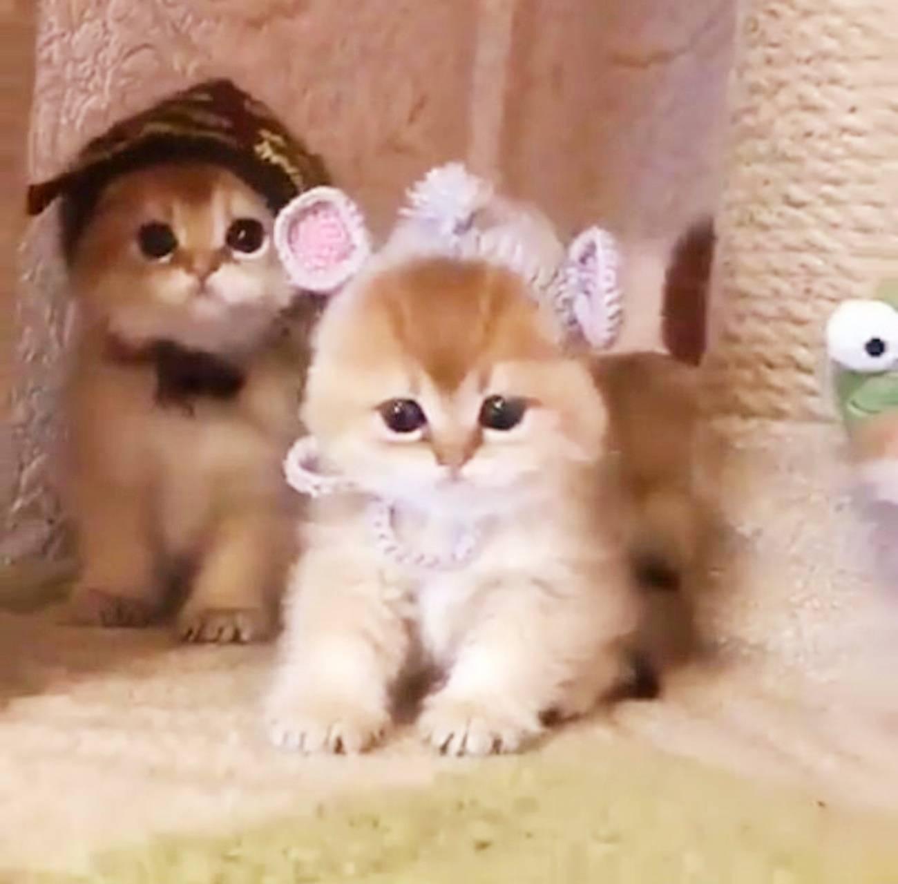 Baby girl kitten