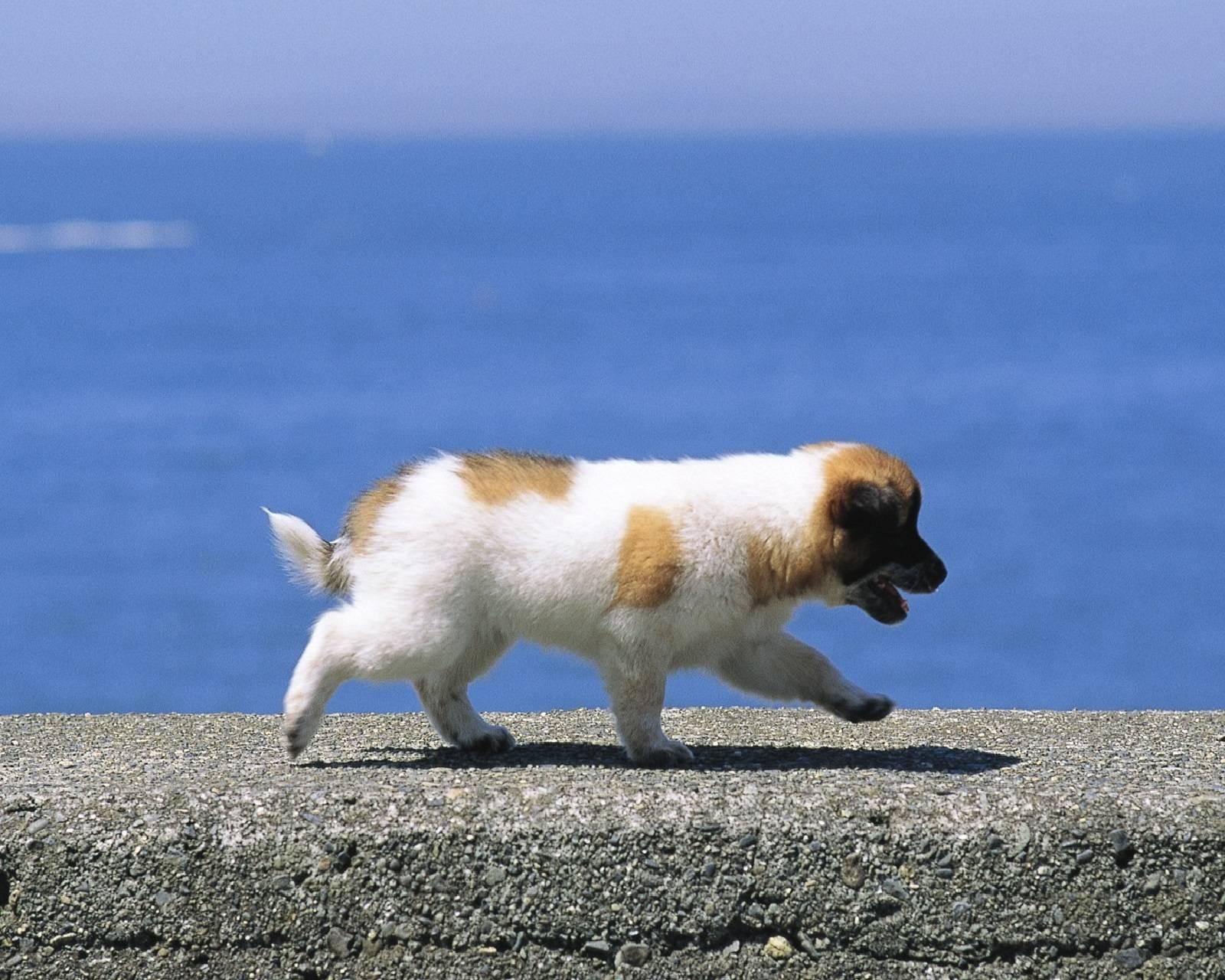 Power Walking Pup