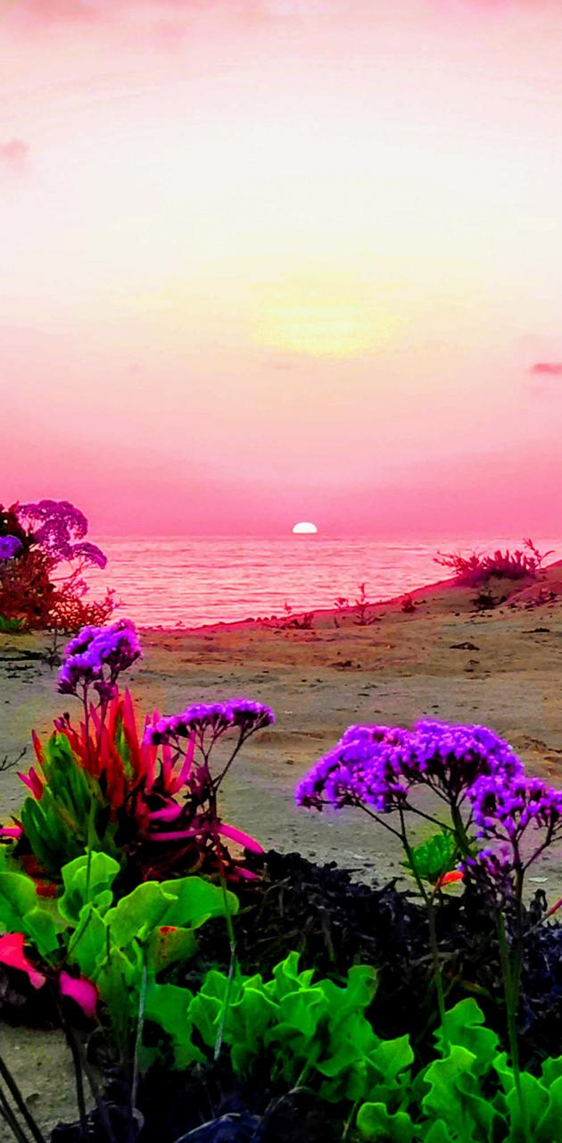 Delmar sunset