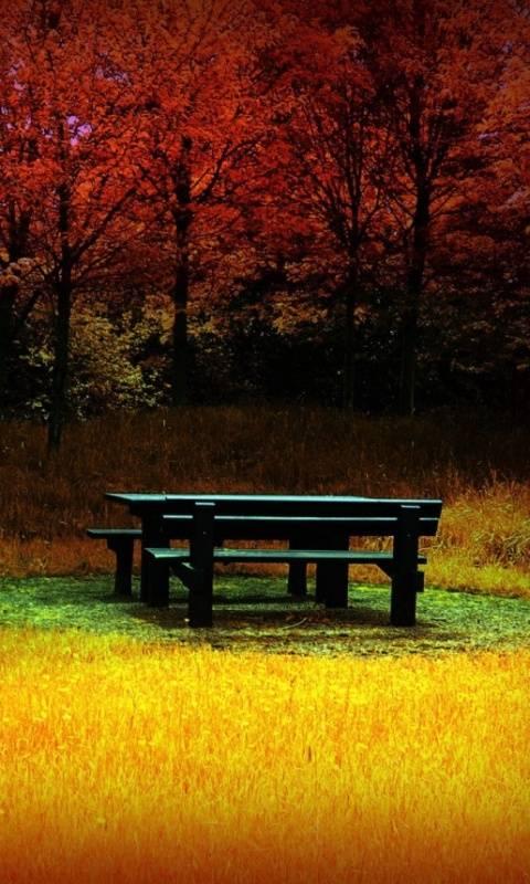 Nature Seasons