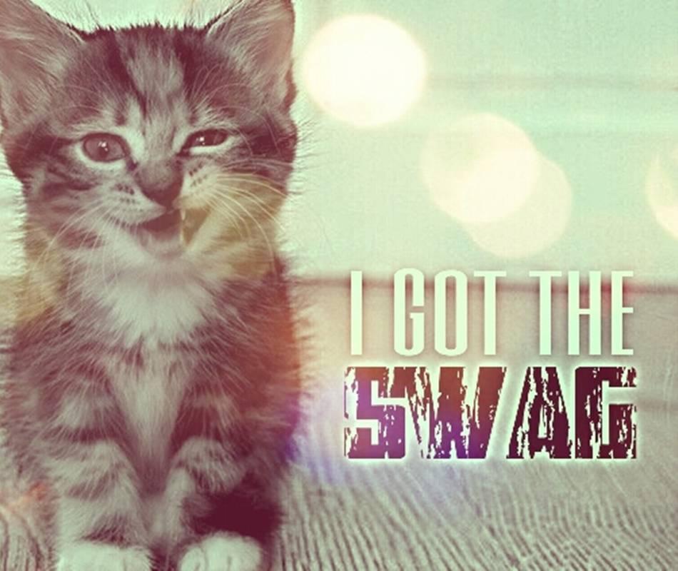 Kittens Got Swag