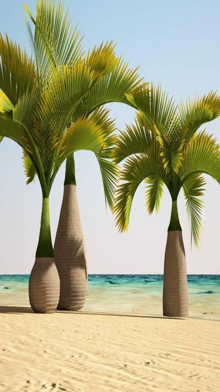 Champion Palms