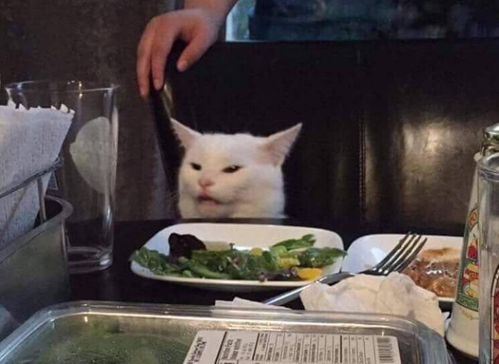 Confused cat meme