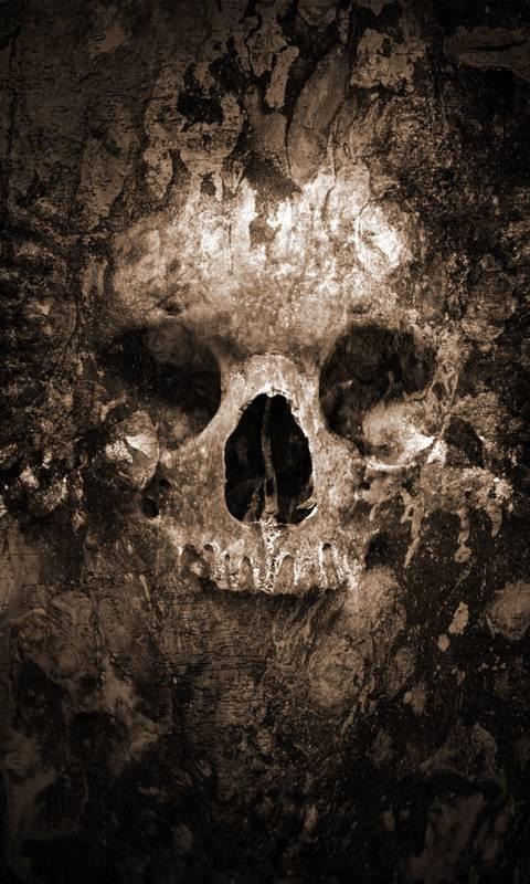 Skull In Rocks