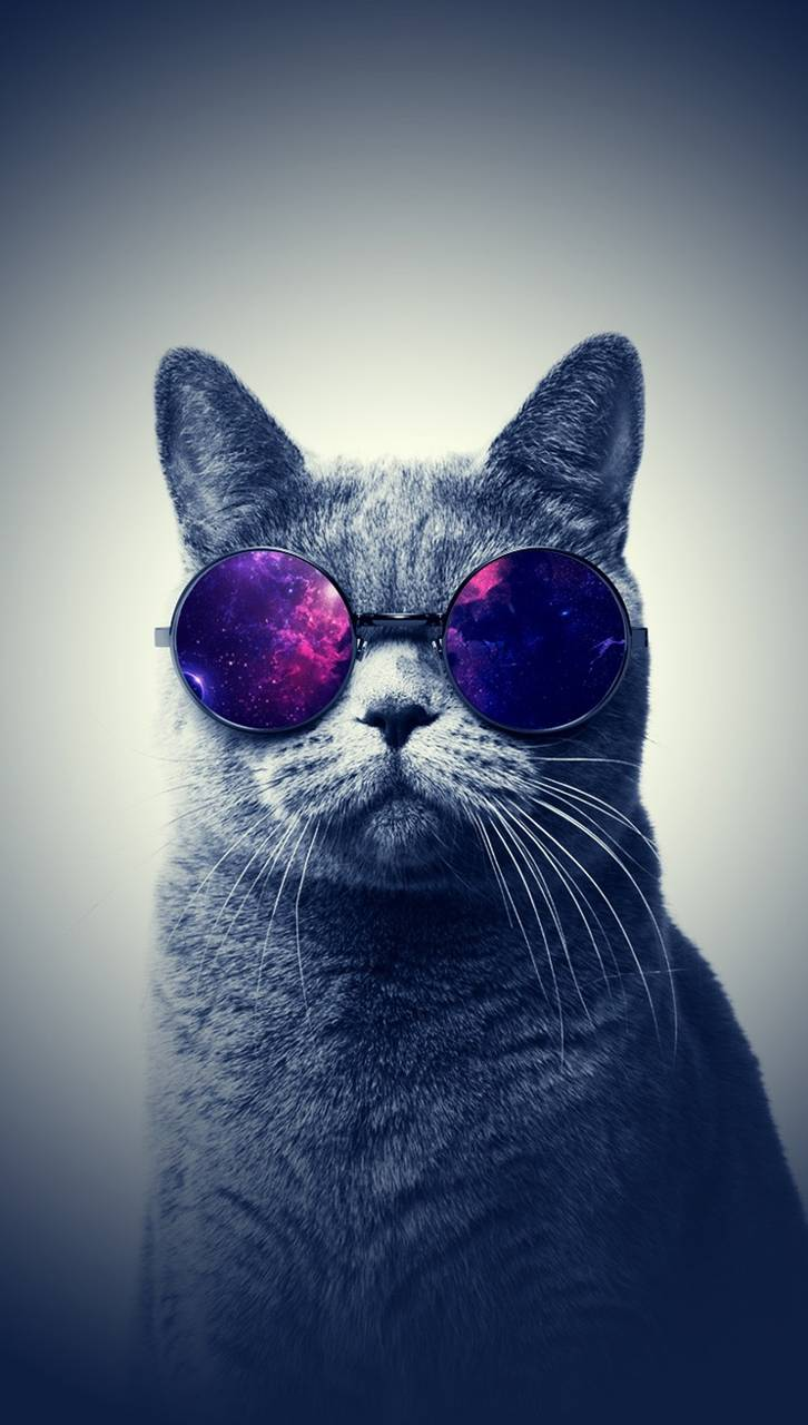 Cool Cat Glasses Wallpaper By MarkoSilveira