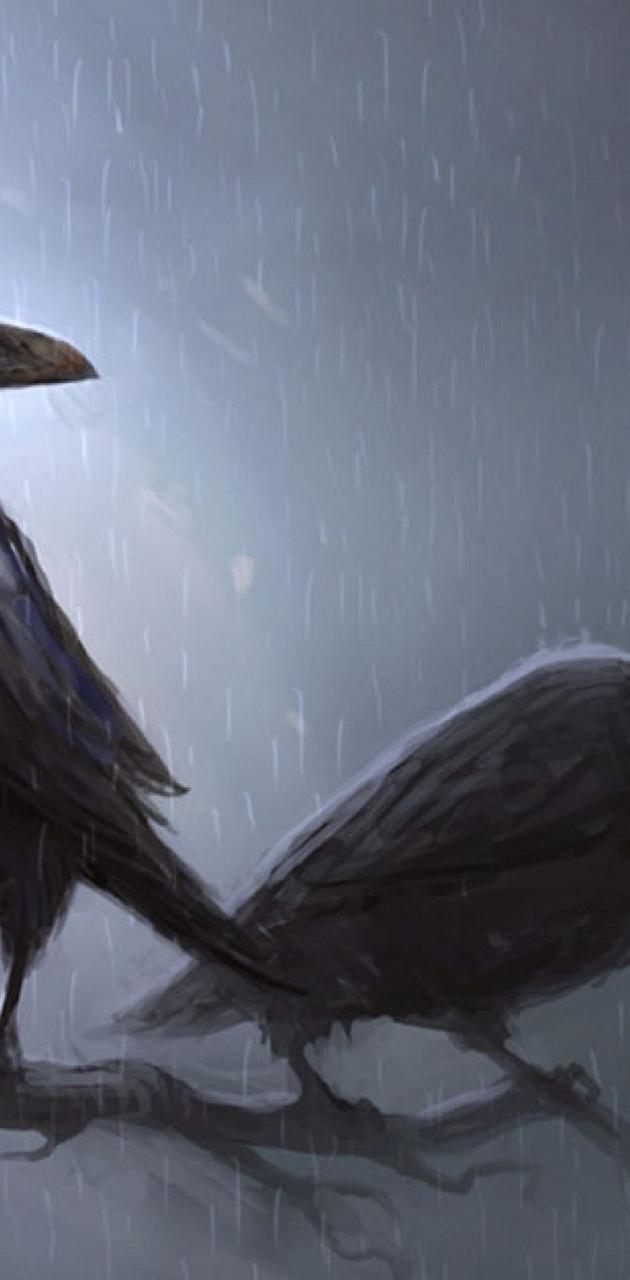 Crow - Raven