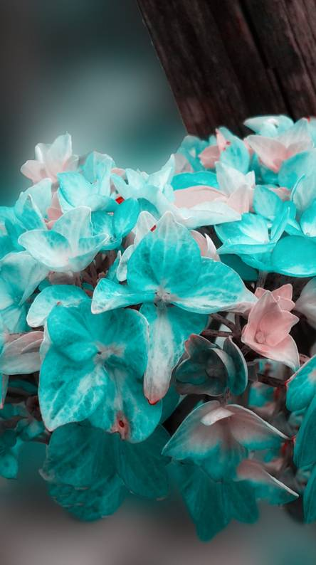 Flower on turquoise