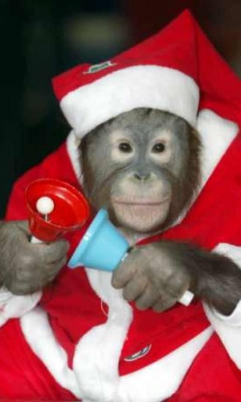 Monkey Santa