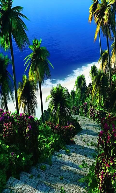 Digital Tropics