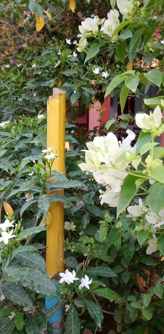 Ibad flower