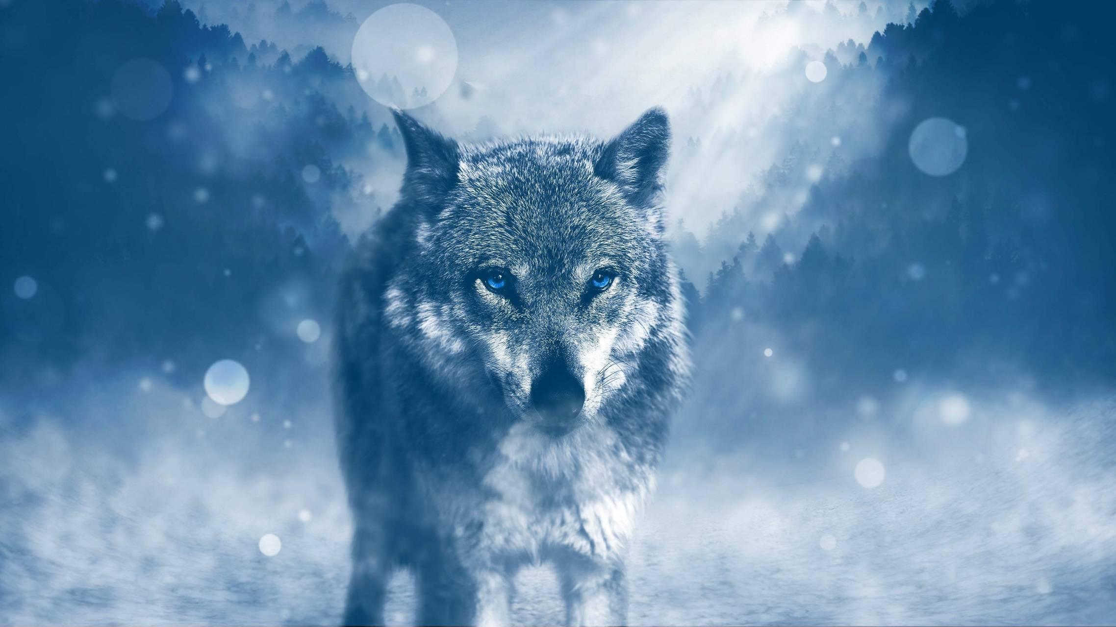 SILKY WOLF