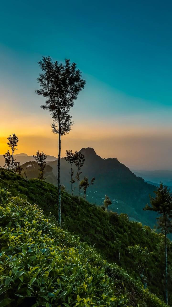 Landscape - Badulla