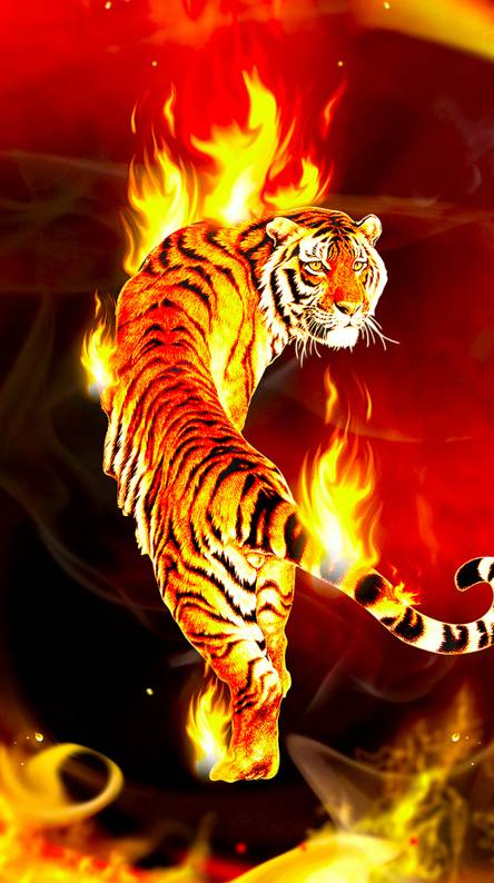 Fire Tiger Wallpapers Free By Zedge