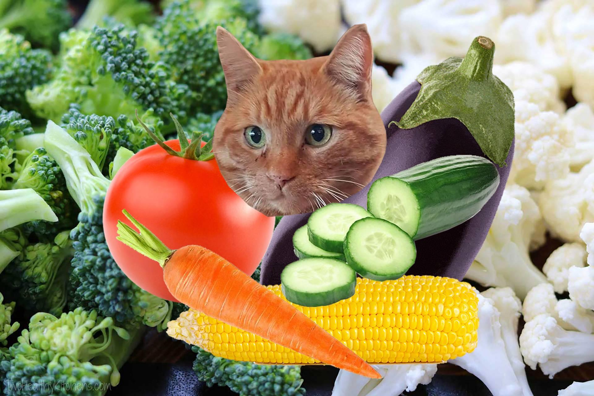 For my vegan fans