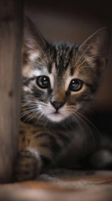 kitty round corner