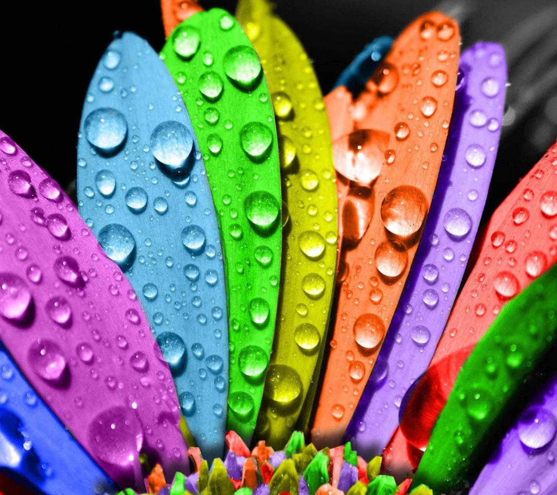 Colorful Petals