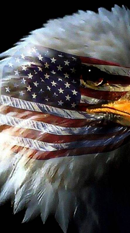 American Eagle Wallpapers Free By Zedge