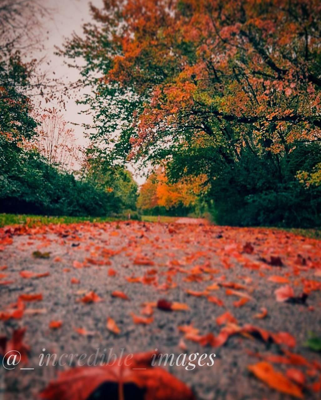 Fall 4 autumn
