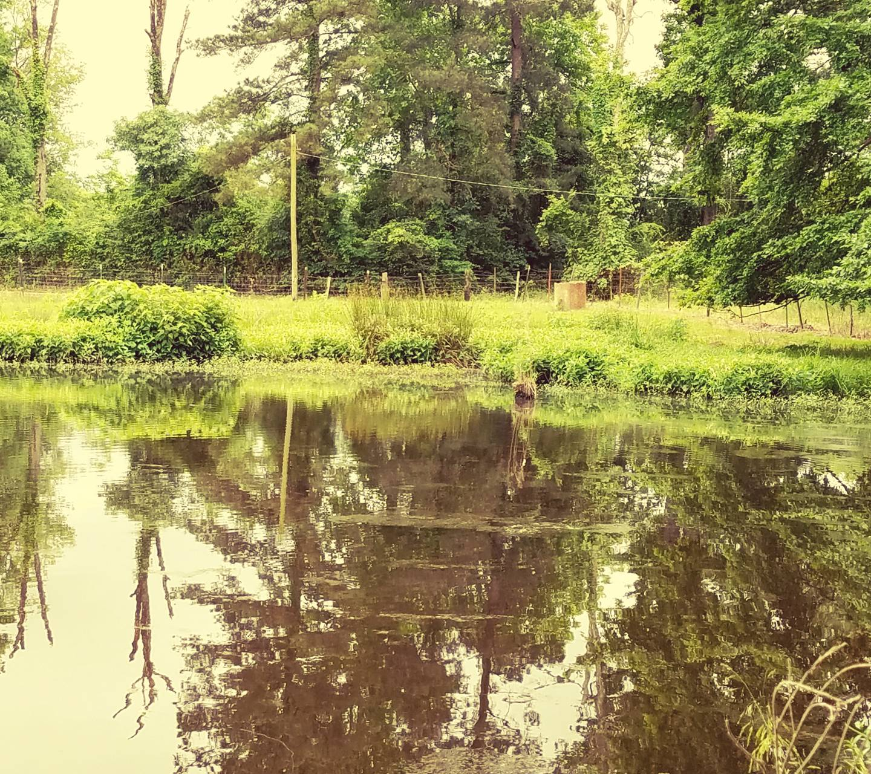 The Pond01