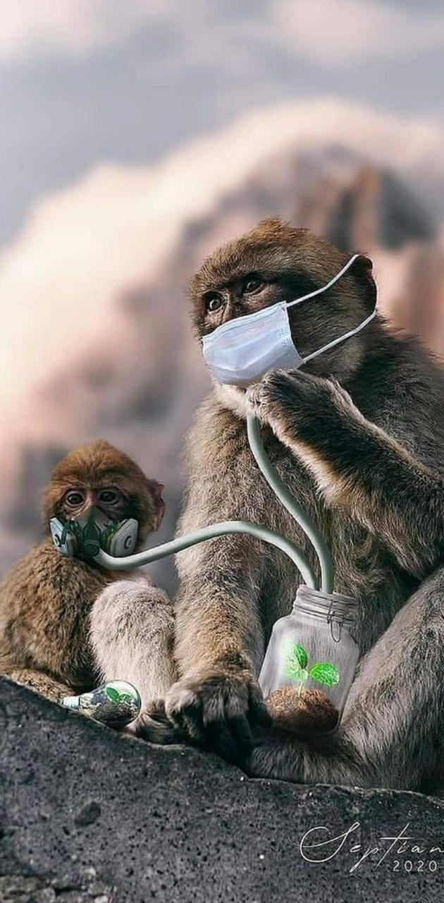 Oxygen monkey