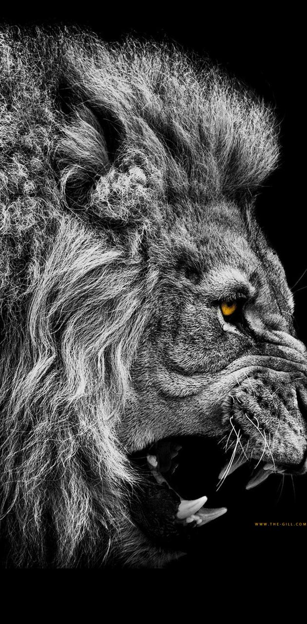 Lion - No Fear
