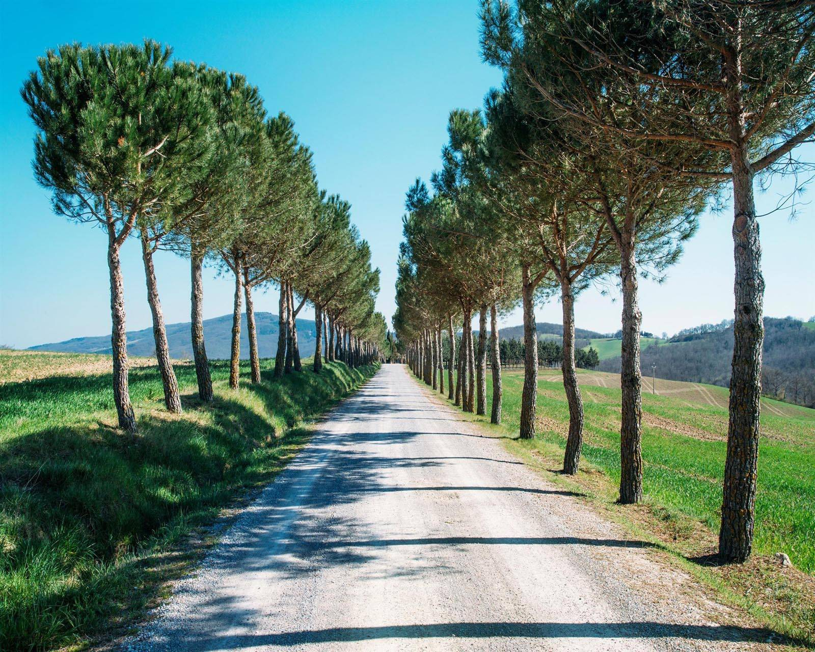 Road Trees path