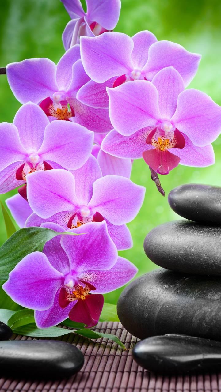 Zen Stones Orchid