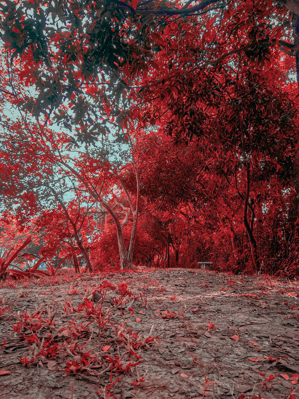 Red tress