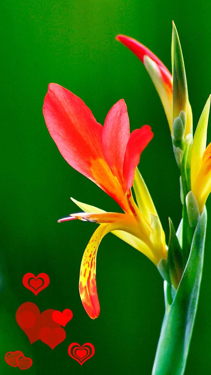 bright flower love