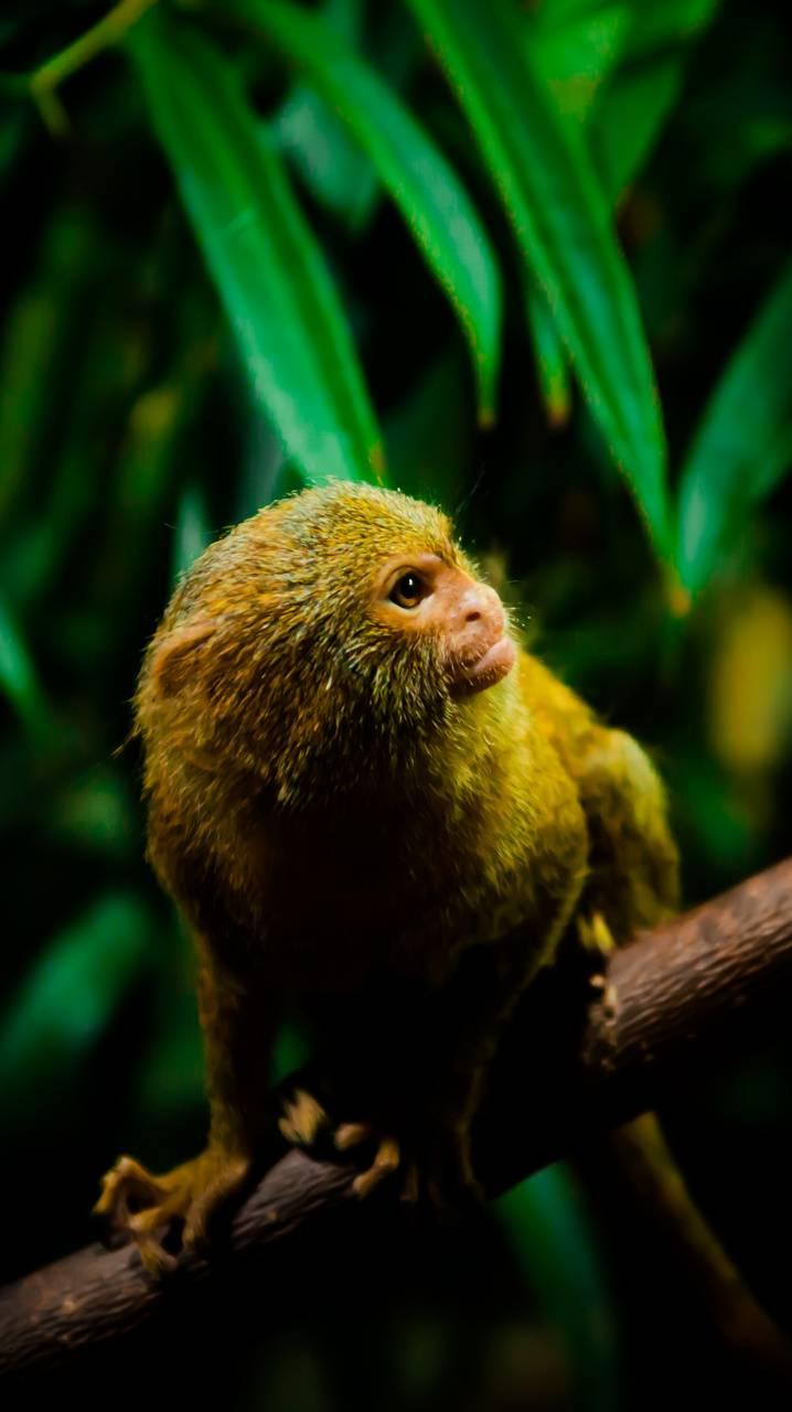 Monkey 360x640