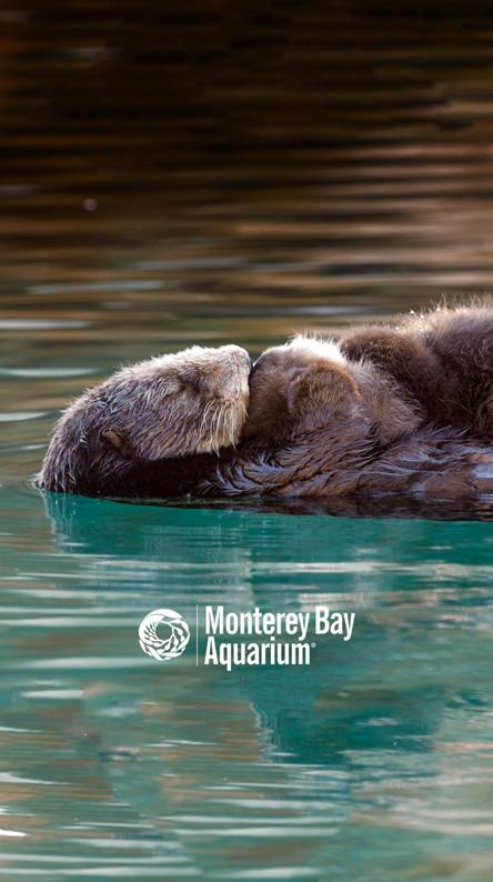 Otter Wallpapers Free By Zedge