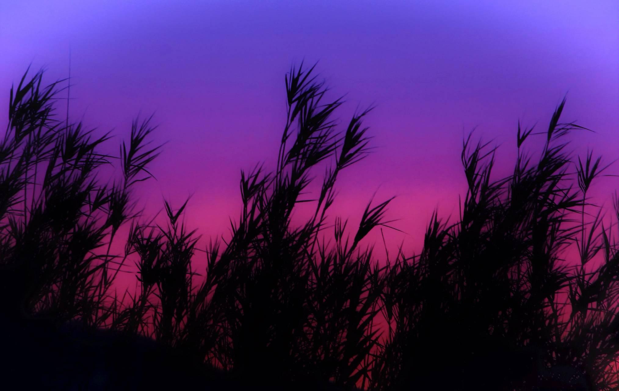 Purple Bamboo