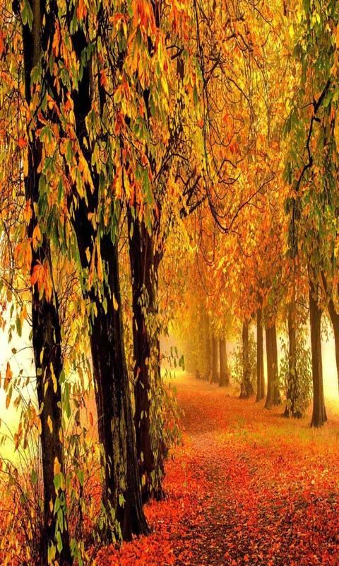 Nature autumn forest