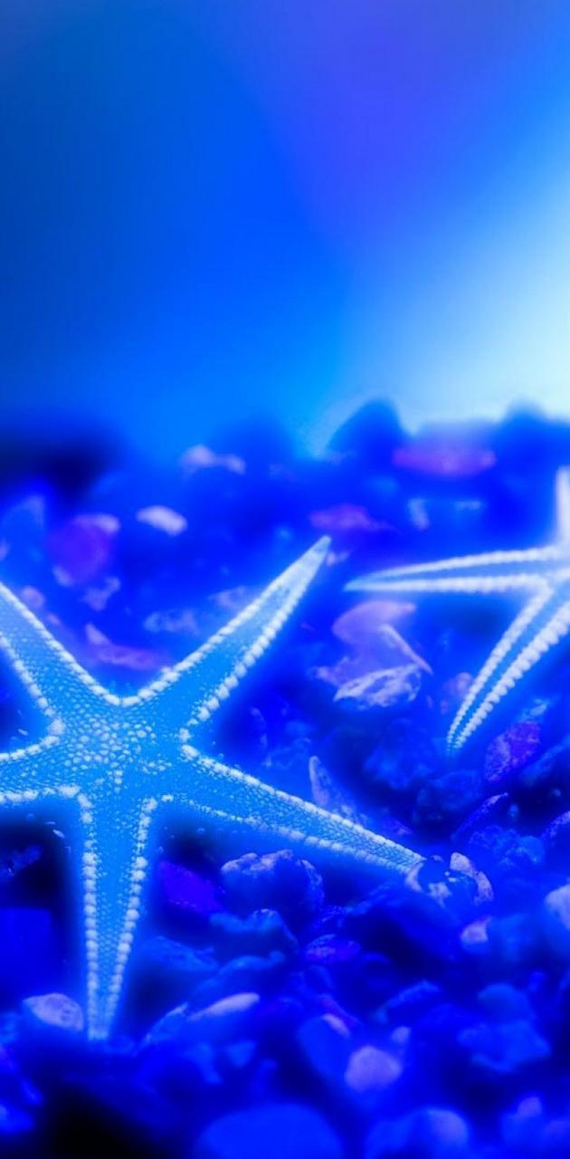 Blue Starfishes