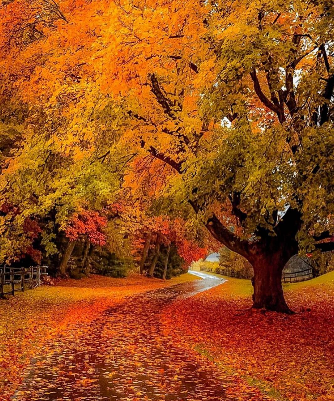 Autumn landscaping
