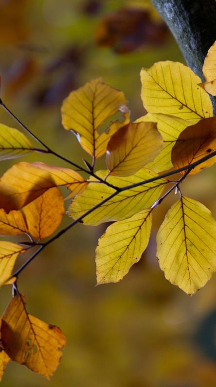Leaves Hd