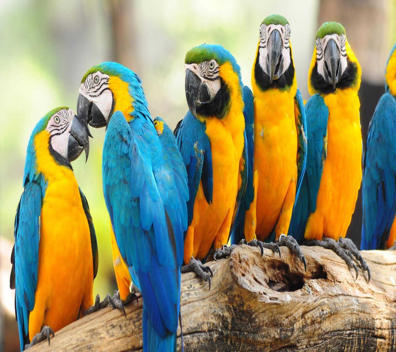Cute Parrots Love