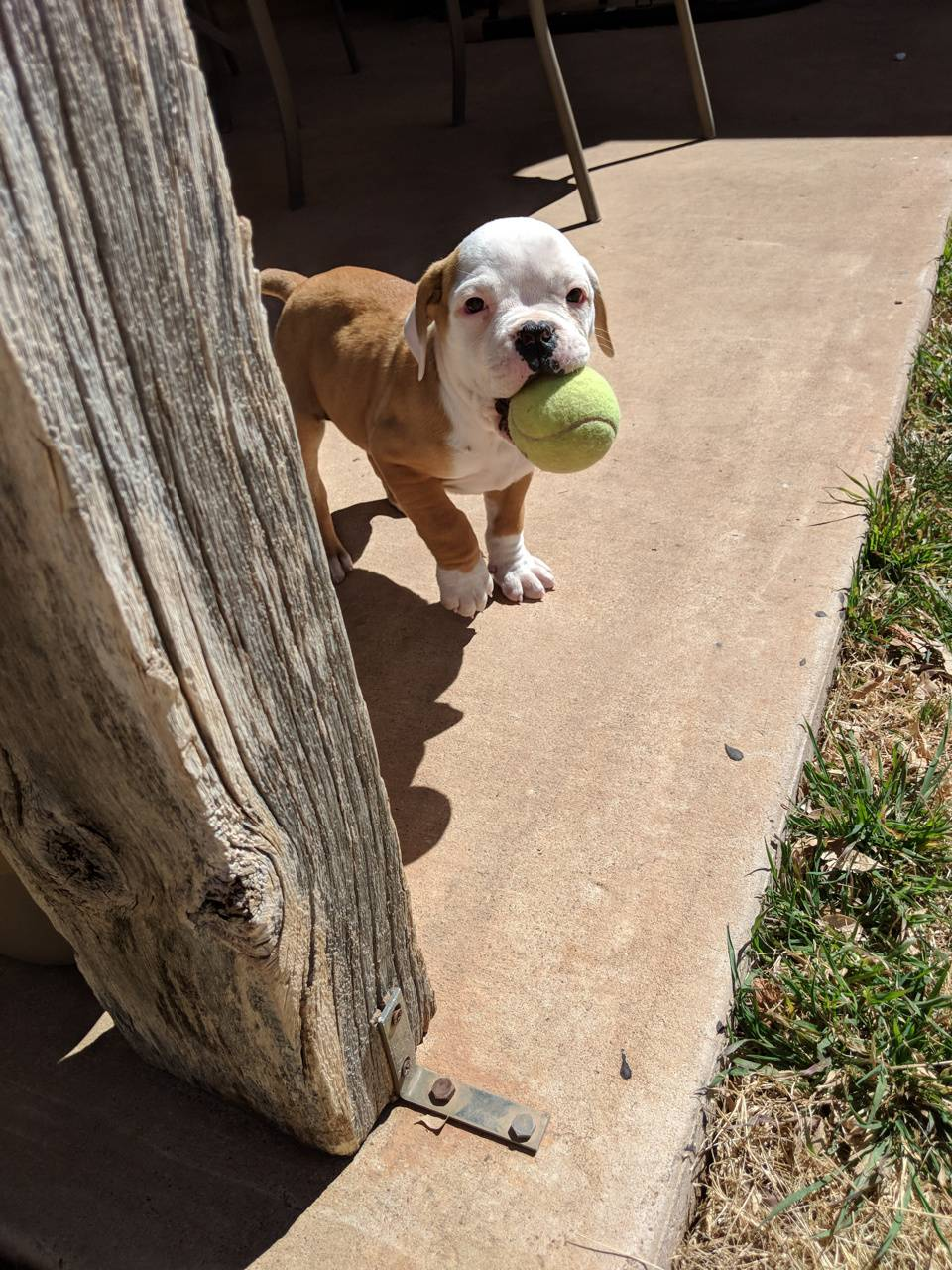 Puppy and her ball